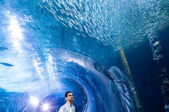 aquarium-of-the-bay-underwater-1200x675