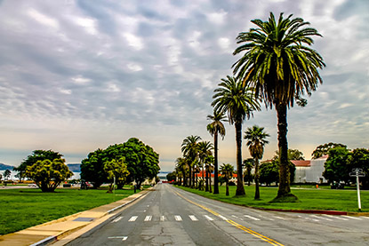 The Presidio palm trees.
