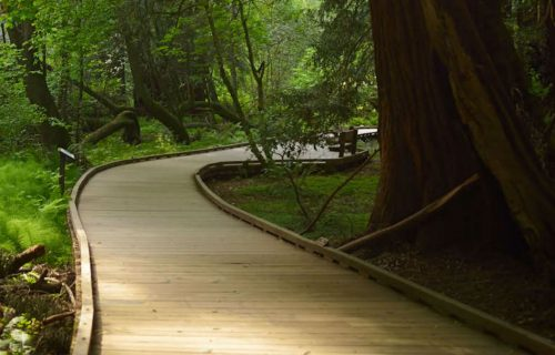 muir_woods_ace_parking_and_shuttle_1210x674