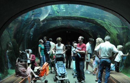Aquarium Tunnel at California Academy of Sciences in San Francisco